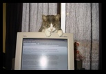 Sherri's Cat - Kitty Kitty - December 03, 2002 - Kitty Kitty on Television watching Sherri Work
