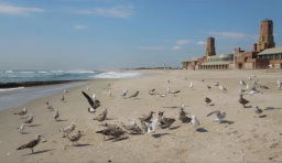 Feeding Seagulls at Riis Park
